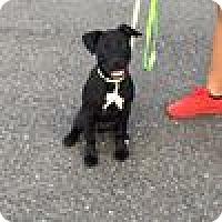 Adopt A Pet :: Philly - Burlington, NJ