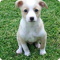Adopt A Pet :: Butters - La Habra Heights, CA