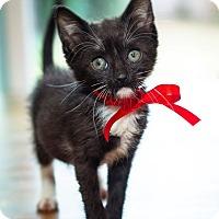 Adopt A Pet :: Pie - Los Angeles, CA