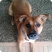 Adopt A Pet :: Bella May **Courtesy Posting** - Warrenton, MO