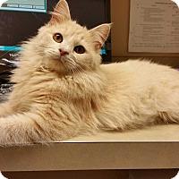 Adopt A Pet :: Murphy - Mt. Airy, NC