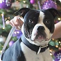 Adopt A Pet :: Koji - Fresno, CA