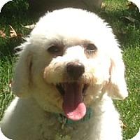 Adopt A Pet :: Sophie - La Costa, CA