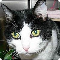 Adopt A Pet :: Miss Kitty - Greenville, SC
