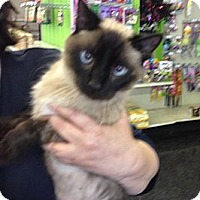 Adopt A Pet :: Sinbad - Troy, OH