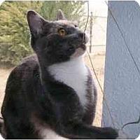 Adopt A Pet :: Olympia - Elverta, CA
