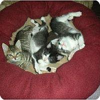 Adopt A Pet :: Tigger - Huffman, TX