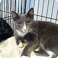 Adopt A Pet :: Smokey - Cottonport, LA