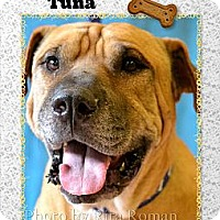 Adopt A Pet :: TUNA - Higley, AZ