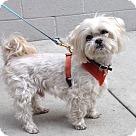Adopt A Pet :: Liam Levi