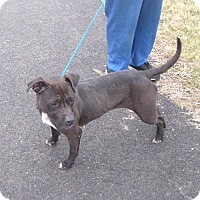 Adopt A Pet :: #473-14 RESCUED! - Zanesville, OH