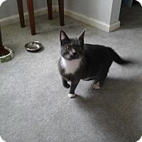 Adopt A Pet :: Lizzie - Fairborn, OH