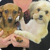 Adopt A Pet :: Truffles & Ruffles - Hagerstown, MD