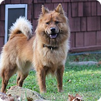 Adopt A Pet :: Victoria - Tucker, GA
