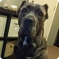 Adopt A Pet :: Jewlz - selden, NY