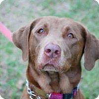 Adopt A Pet :: Kiley - Minneola, FL