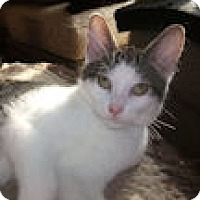 Adopt A Pet :: Sloane - Mississauga, Ontario, ON