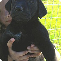 Adopt A Pet :: Antonio--arriving soon in NH! - Chichester, NH