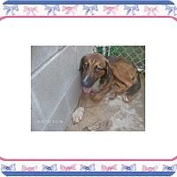 Adopt A Pet :: ZIGGY - KELLYVILLE, OK
