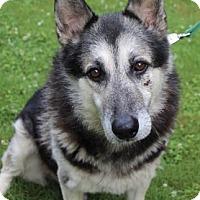 Adopt A Pet :: Rex - Chester Springs, PA
