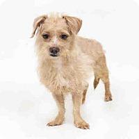 Adopt A Pet :: LATTE - Orlando, FL