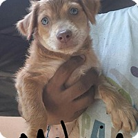 Adopt A Pet :: Melanie  arrive 9.29 - Hillside, IL