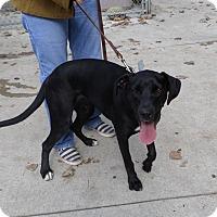 Adopt A Pet :: Fanny - Beacon, NY