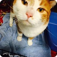 Adopt A Pet :: Felix - Holland, MI