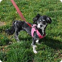 Adopt A Pet :: Elizabeth - Akron, OH