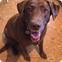 Adopt A Pet :: Kona - Phoenix, AZ
