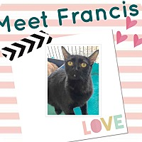Adopt A Pet :: Francis - Orange, CA