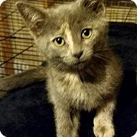 Adopt A Pet :: Maggie - Speedway, IN
