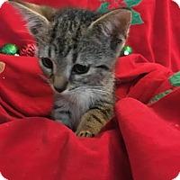 Adopt A Pet :: Feeney - Orlando, FL