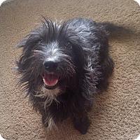 Adopt A Pet :: LILY - Las Vegas, NV
