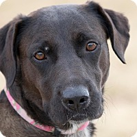 Adopt A Pet :: Sissy - Broken Arrow, OK
