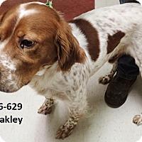 Adopt A Pet :: Oakley - Cannelton, IN
