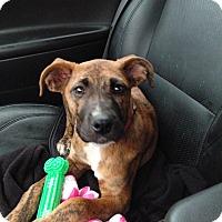 Adopt A Pet :: Nora - PARSIPPANY, NJ