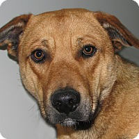 Adopt A Pet :: Bolton - Ruidoso, NM