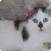 Adopt A Pet :: Eva - Owatonna, MN