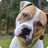 Adopt A Pet :: PEEWEE - Pittsburgh, PA