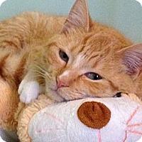 Adopt A Pet :: Tia - Monroe, GA