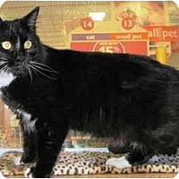 Adopt A Pet :: Dudley - Irvine, CA