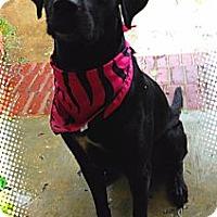 Adopt A Pet :: Gypsy - Richmond, VA