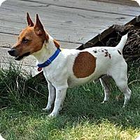 Adopt A Pet :: Owen - Rhinebeck, NY