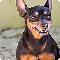Adopt A Pet :: Hershey - Muskegon, MI