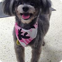 Adopt A Pet :: GLAMOUR - Melbourne, FL