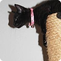 Adopt A Pet :: Dora - Santa Rosa, CA