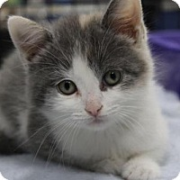 Adopt A Pet :: Sophia - Caistor Centre, ON