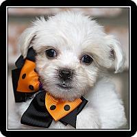 Adopt A Pet :: Baxter - San Dimas, CA