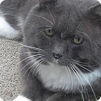 Adopt A Pet :: Hulk - Columbus, OH